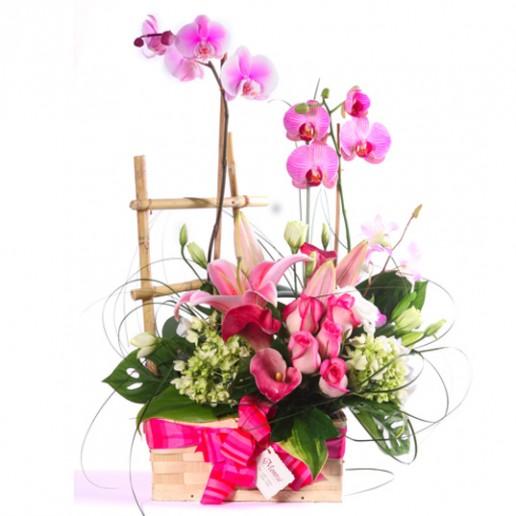 Cesta de orquídea phalenopsis con rosas y orientales