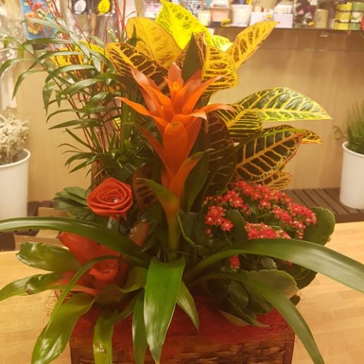 Baúl de mimbre con distintas plantas y tamaños
