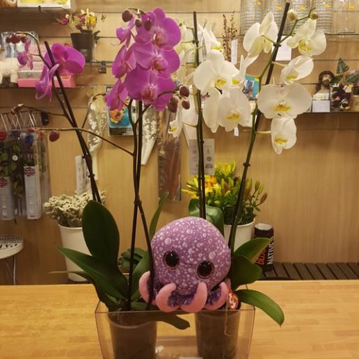 jardineras en metacrilato trasparente con 2 orquídeas