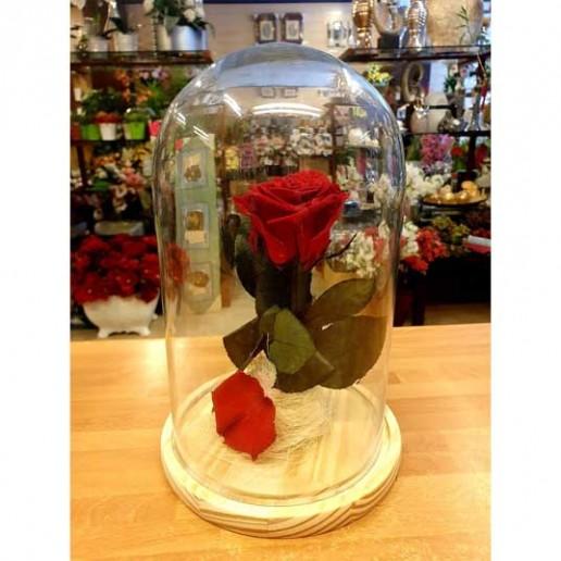 rosa bella y bestia granada 27cm