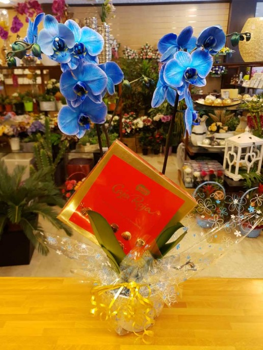 promoción especial orquidea azul en Granada